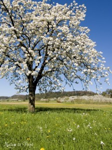 cherrytree-credit-naturetoprint-dot-de